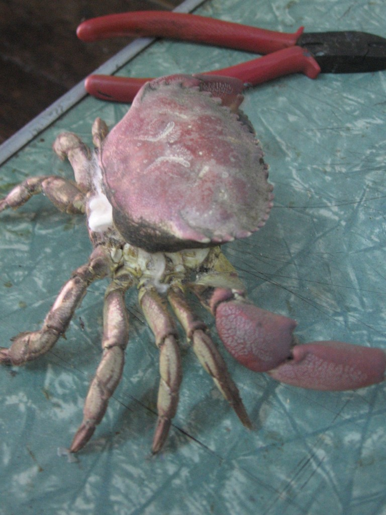 literally stuffed crab